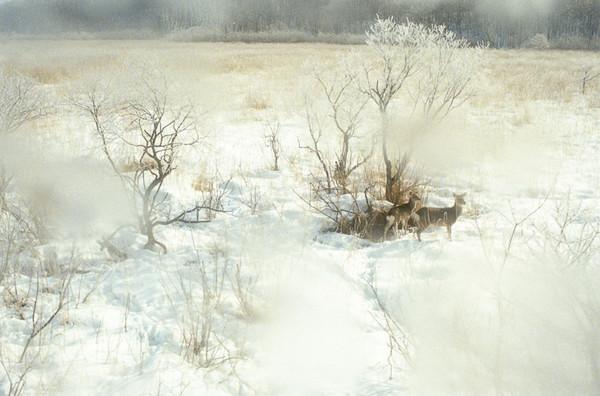 Takeshi Suga迷幻摄影艺术作品集